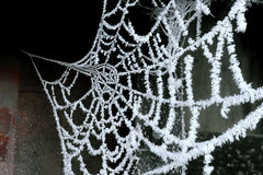 Cobweb with ice crysral Royalty Free Stock Photo