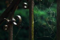 Cobweb on the iron fence. Stock Photography