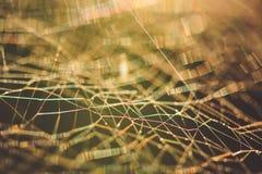 Cobweb macro abstract Stock Photo