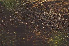 Cobweb macro abstract Stock Images