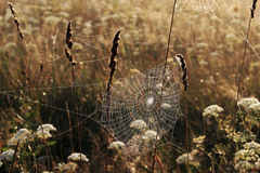 Cobweb in misty morning Stock Photography