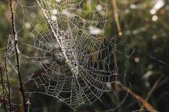 Cobweb in misty morning Royalty Free Stock Photo