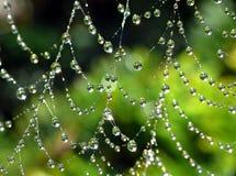 Cobweb molhado Fotos de Stock Royalty Free