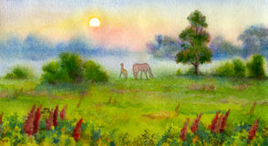 Cobweb morning. Watercolor landscape. The little colt surprise encounters a new miracle birth of a summer day Stock Image