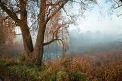 Cobweb morning. Mist over the river at sunrise stock photos