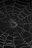Cobweb with morning dew Royalty Free Stock Photo