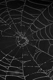 Cobweb with morning dew Royalty Free Stock Photo