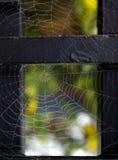 Cobweb with morning dew Royalty Free Stock Image