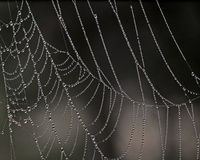 Cobweb Stock Photography