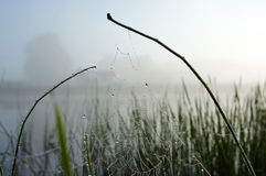 Cobweb with the morning dew. Cobweb with the dew in the morning foggy meadow Royalty Free Stock Image