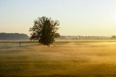 Cobweb morning. Fog in the morning on the way from Latvia. Lonely tree standing in the fog and a beautiful morning sunrise Royalty Free Stock Images