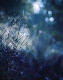 Cobweb. A cobweb on a plant at night royalty free stock images