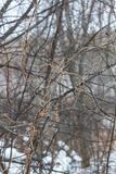 Cobweb from plants in the natural park Olenyi brooks in the Sverdlovsk region royalty free stock photo