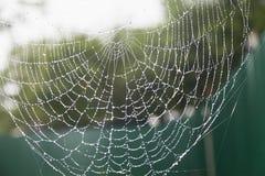 Cobweb in the rain Royalty Free Stock Photos