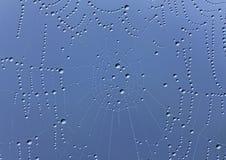 Cobweb with rain drops Stock Photo