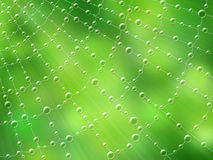 Cobweb after rain, illustration royalty free stock photography