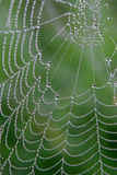 Cobweb on the rainy morning Royalty Free Stock Photos