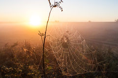 Cobweb of a spider against sunrise Royalty Free Stock Photography