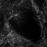 Cobweb and Spider on black background Royalty Free Stock Images