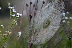Cobweb and spider Royalty Free Stock Photos