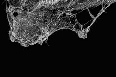 Cobweb or spider web isolated on black background in ancient thai house Royalty Free Stock Images