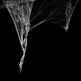 Cobweb or spider web isolated on black background in ancient thai house Royalty Free Stock Photos