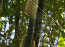 Cobweb stretched across trees Stock Photo
