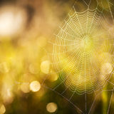 Cobweb summer Royalty Free Stock Photos