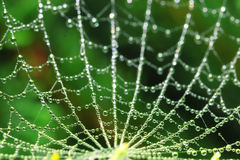 Cobweb at summer forest Royalty Free Stock Image