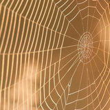Cobweb in the sun Royalty Free Stock Photo
