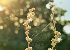 Cobweb in sunlight Stock Photography