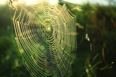 Cobweb at sunset Royalty Free Stock Photography