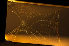 Cobweb on the sunset in the frame royalty free stock photos