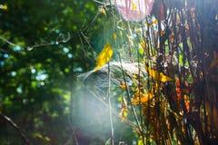 Cobweb in sunshine. Web in sunshine, wood Royalty Free Stock Image