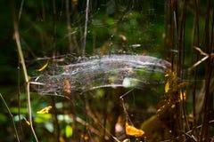 Cobweb in sunshine. Web in sunshine, wood Royalty Free Stock Images