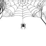 Cobweb between tree branches and a small spider on a white background. Black-and-white drawing. Vector illustration Stock Photography