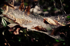 Cobweb on tree Stock Photo