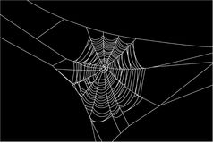 Cobweb Stock Photos