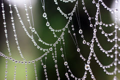 Cobweb. Stock Photography