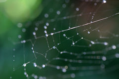 Free Cobweb With Drops Stock Photography - 2263522