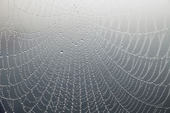 Free Cobweb With Morning Dew Royalty Free Stock Image - 33517916