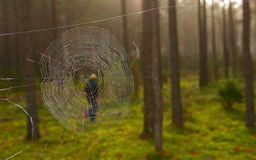 Cobweb in the woods Royalty Free Stock Image