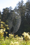 Cobweb in the woods. Royalty Free Stock Photos