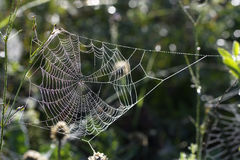 Cobweb in the woods. Royalty Free Stock Images