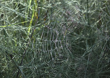 Cobweb in the woods Royalty Free Stock Photo