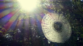 Cobweb in the woods after a rain royalty free stock photos