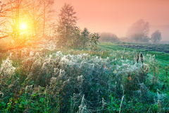 Cobwebby meadow royalty free stock photography