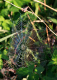 cobwebregnbåge Arkivfoto