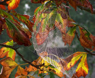 Cobwebs. Detail - in the background of autumn leaves Stock Photography