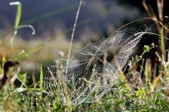 cobwebs royalty-vrije stock foto